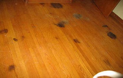dog urine on wood floor | wb designs